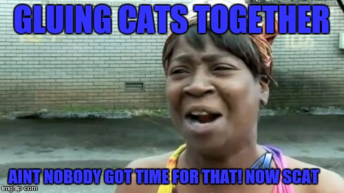 Aint Nobody Got Time For That Meme | GLUING CATS TOGETHER AINT NOBODY GOT TIME FOR THAT! NOW SCAT | image tagged in memes,aint nobody got time for that | made w/ Imgflip meme maker