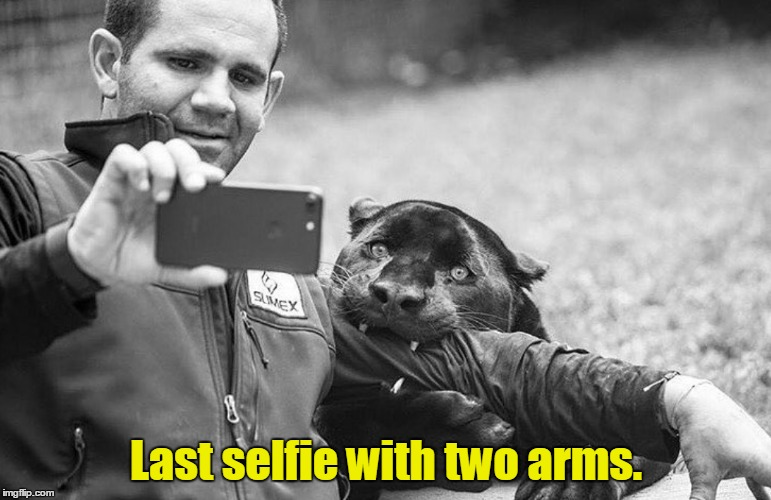 W.T.F. were you thinking? | Last selfie with two arms. | image tagged in funny,selfie,animal,amputee | made w/ Imgflip meme maker