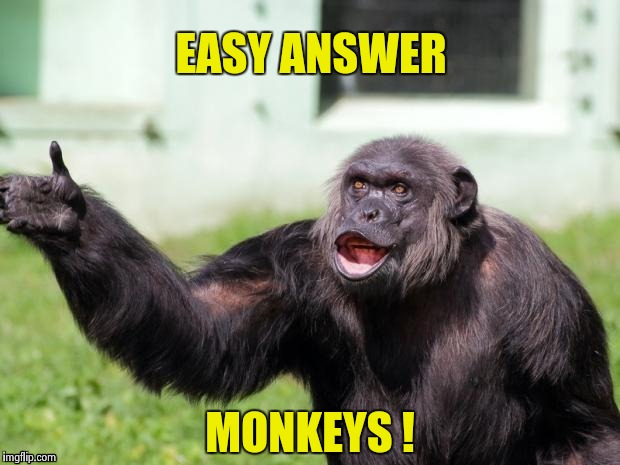 Gorilla your dreams | EASY ANSWER MONKEYS ! | image tagged in gorilla your dreams | made w/ Imgflip meme maker