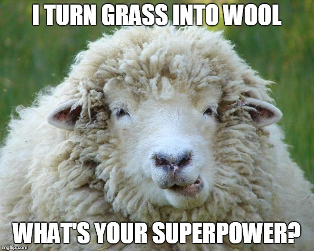 I TURN GRASS INTO WOOL WHAT'S YOUR SUPERPOWER? | image tagged in sheep | made w/ Imgflip meme maker