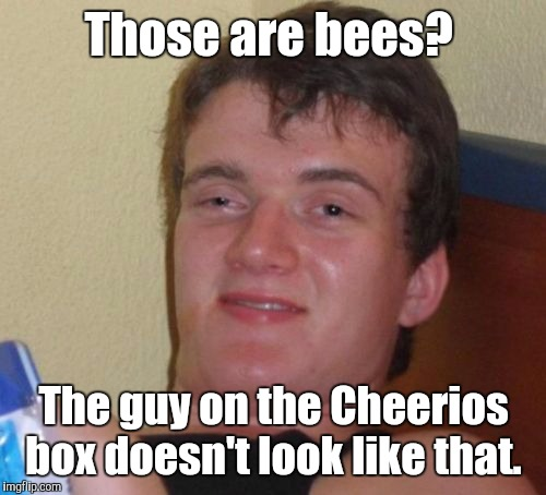 10 Guy Meme | Those are bees? The guy on the Cheerios box doesn't look like that. | image tagged in memes,10 guy | made w/ Imgflip meme maker