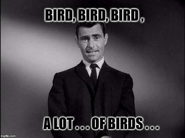 When bird is the word... | BIRD, BIRD, BIRD , A LOT . . . OF BIRDS . . . | image tagged in rod serling twilight zone,birds,the twilight zone,massive | made w/ Imgflip meme maker