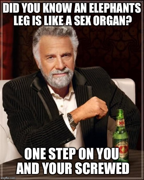 May we address the elephant in the room? | DID YOU KNOW AN ELEPHANTS LEG IS LIKE A SEX ORGAN? ONE STEP ON YOU AND YOUR SCREWED | image tagged in memes,the most interesting man in the world,funny | made w/ Imgflip meme maker