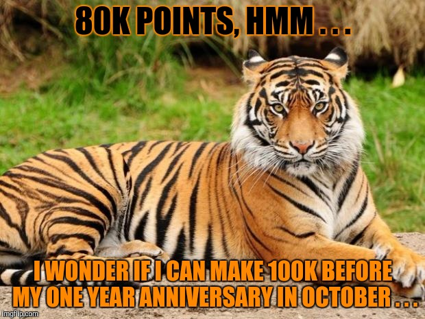 This is a callout message to you guys . . . | 80K POINTS, HMM . . . I WONDER IF I CAN MAKE 100K BEFORE MY ONE YEAR ANNIVERSARY IN OCTOBER . . . | image tagged in srsly tiger,80,100k,100k points,help me,one year anniversary | made w/ Imgflip meme maker