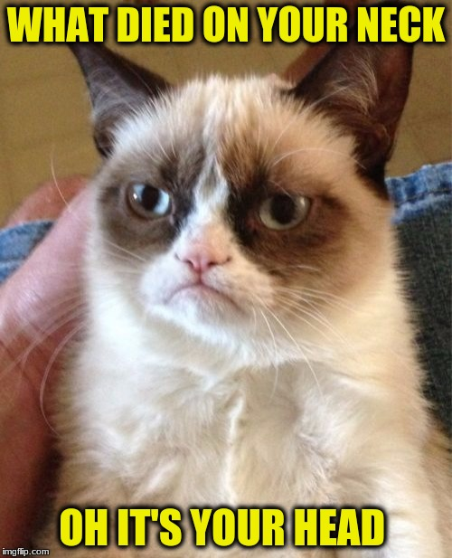Grumpy Cat Meme | WHAT DIED ON YOUR NECK OH IT'S YOUR HEAD | image tagged in memes,grumpy cat | made w/ Imgflip meme maker
