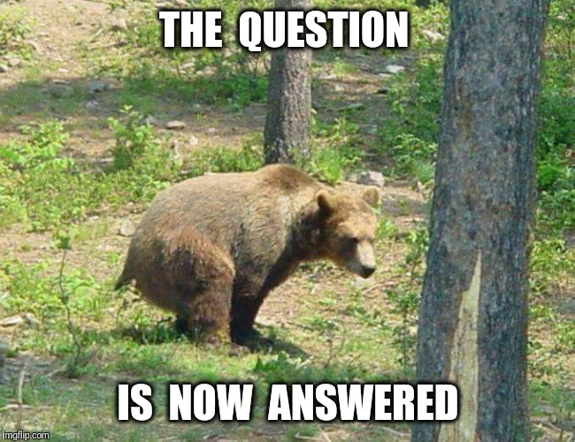 Does a bear..... | THE  QUESTION IS  NOW  ANSWERED | image tagged in bear,woods,crap | made w/ Imgflip meme maker
