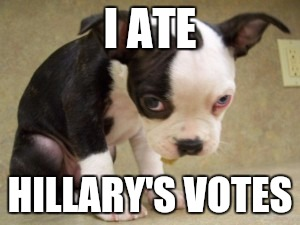 Brought to you by The Clinton Foundation. | I ATE HILLARY'S VOTES | image tagged in memes,funny,dogs | made w/ Imgflip meme maker