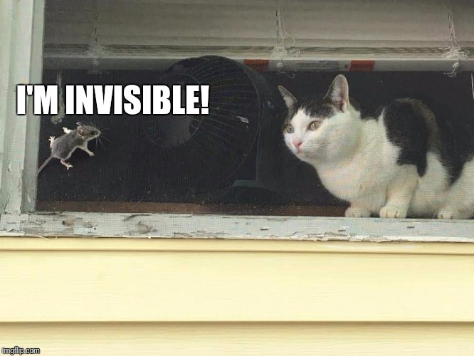 I'M INVISIBLE! | image tagged in mouse teasing cat | made w/ Imgflip meme maker