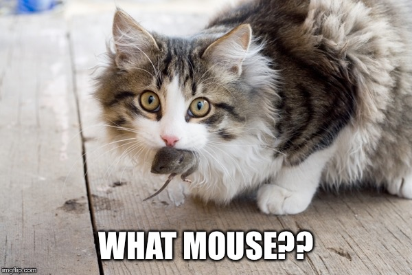 WHAT MOUSE?? | made w/ Imgflip meme maker