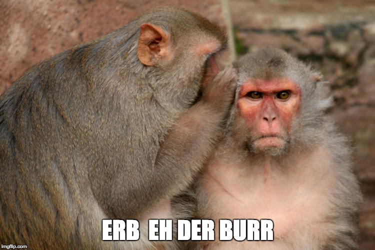 ERB  EH DER BURR | image tagged in whispering monkeys | made w/ Imgflip meme maker