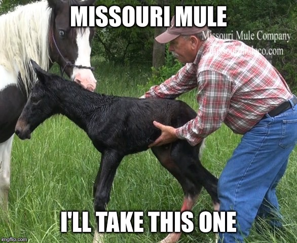 MISSOURI MULE I'LL TAKE THIS ONE | made w/ Imgflip meme maker