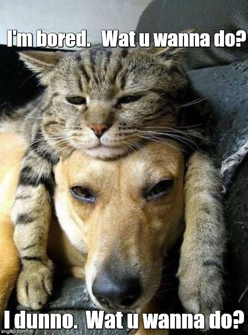 Lazy dog and cat | I'm bored.   Wat u wanna do? I dunno.  Wat u wanna do? | image tagged in memes,cats,dogs | made w/ Imgflip meme maker