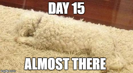 ninja dog | DAY 15 ALMOST THERE | image tagged in poodle | made w/ Imgflip meme maker