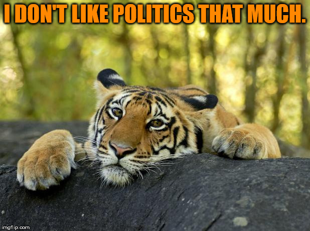 Yes, I know, not a great time to put that out there . . . | I DON'T LIKE POLITICS THAT MUCH. | image tagged in confession tiger,politics | made w/ Imgflip meme maker