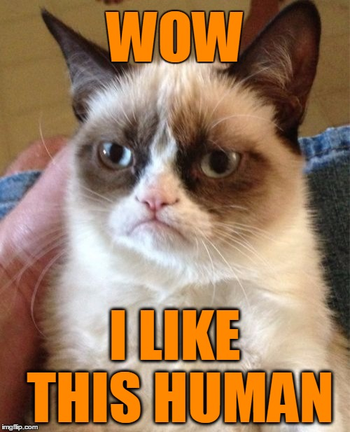 Grumpy Cat Meme | WOW I LIKE THIS HUMAN | image tagged in memes,grumpy cat | made w/ Imgflip meme maker