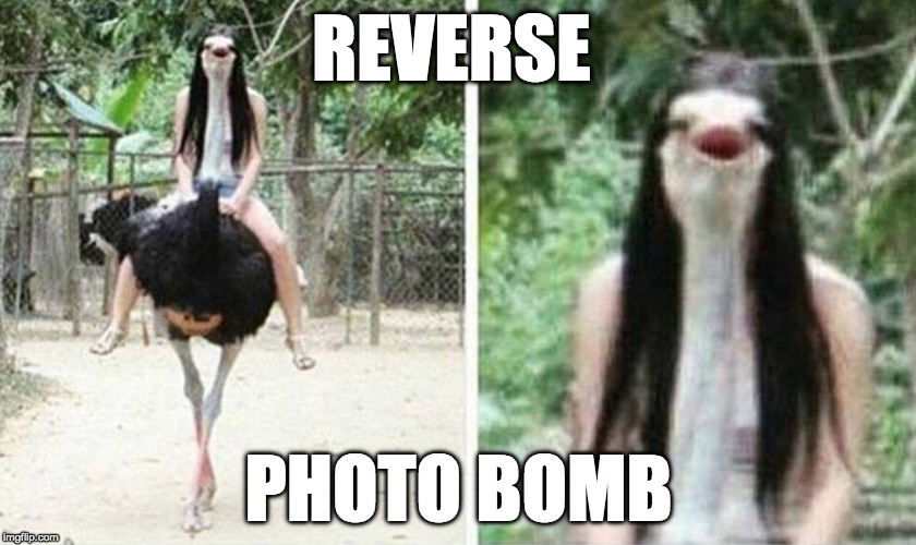 I find this funnier than I should | REVERSE PHOTO BOMB | image tagged in photobomb,photo bomb,reverse | made w/ Imgflip meme maker