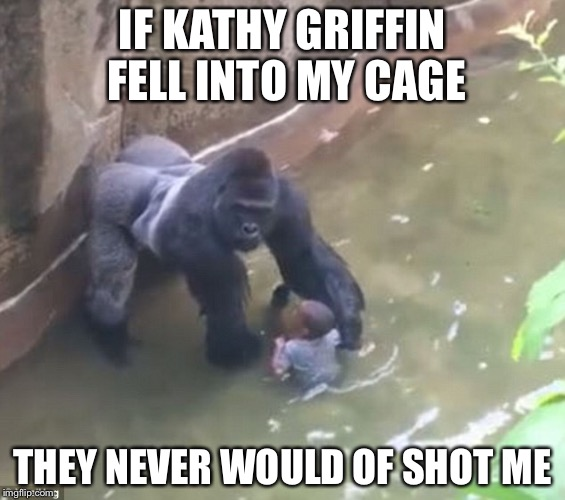 Covfefe | IF KATHY GRIFFIN FELL INTO MY CAGE THEY NEVER WOULD OF SHOT ME | image tagged in harambe,kathy griffin,memes,socrates | made w/ Imgflip meme maker