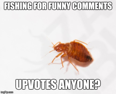 How do you like my bait? | FISHING FOR FUNNY COMMENTS UPVOTES ANYONE? | image tagged in don't try this at home,funny,fishing | made w/ Imgflip meme maker
