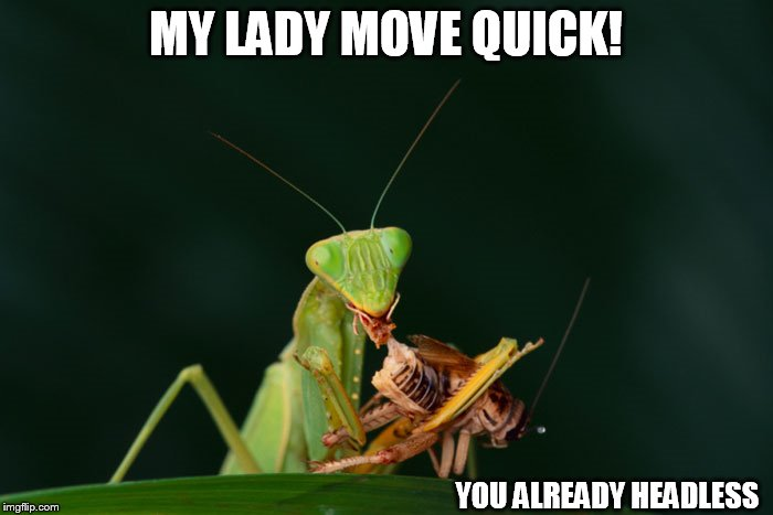 MY LADY MOVE QUICK! YOU ALREADY HEADLESS | made w/ Imgflip meme maker