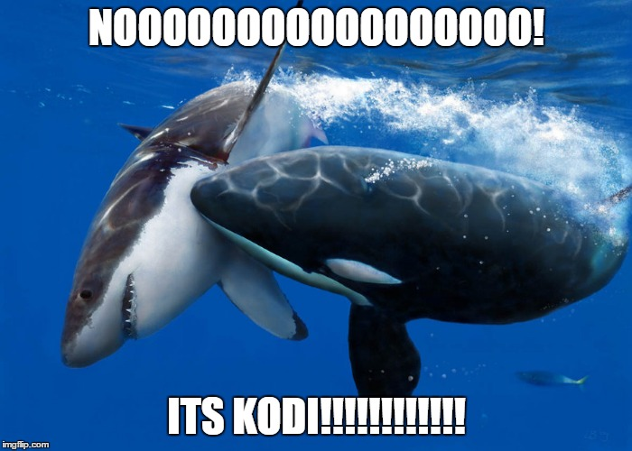 NOOOOOOOOOOOOOOOOO! ITS KODI!!!!!!!!!!!! | made w/ Imgflip meme maker