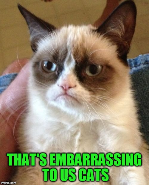 Grumpy Cat Meme | THAT'S EMBARRASSING TO US CATS | image tagged in memes,grumpy cat | made w/ Imgflip meme maker