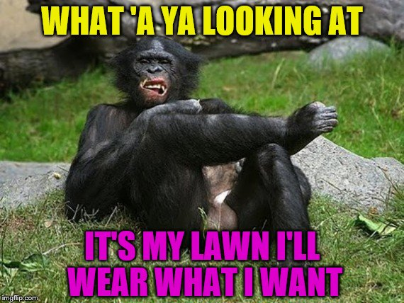 Just hanging' out | WHAT 'A YA LOOKING AT IT'S MY LAWN I'LL WEAR WHAT I WANT | image tagged in animals,monkey business,memes | made w/ Imgflip meme maker