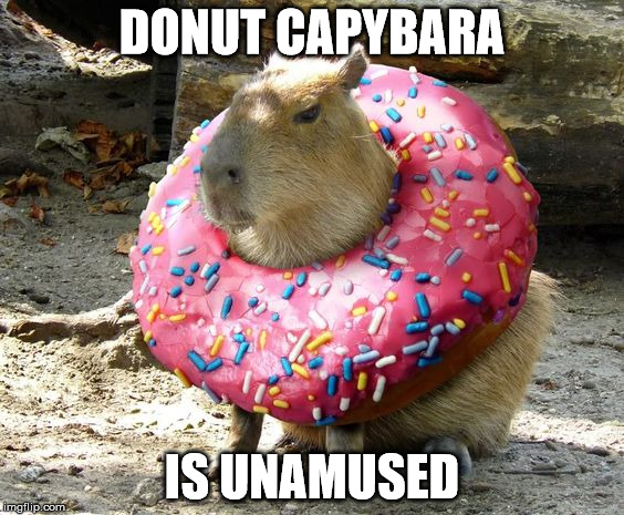 Donut Capybara | DONUT CAPYBARA IS UNAMUSED | image tagged in capybara,funny animals,funny,funny memes | made w/ Imgflip meme maker