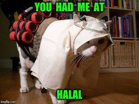 This cat IS the Bomb. | YOU  HAD  ME  AT HALAL | image tagged in bomb,halal,ramadan | made w/ Imgflip meme maker