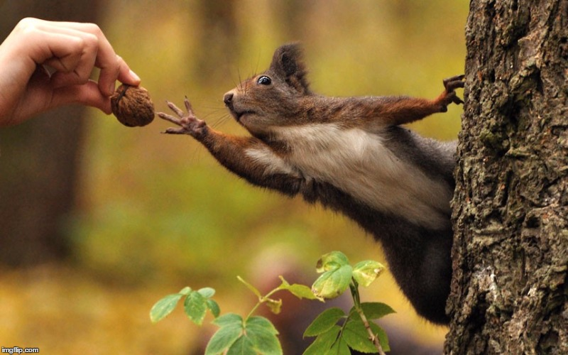 Squirrel reaching for nut | . | image tagged in squirrel reaching for nut | made w/ Imgflip meme maker