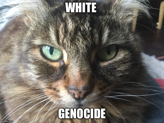 Cat Speaks | WHITE GENOCIDE | image tagged in cats | made w/ Imgflip meme maker