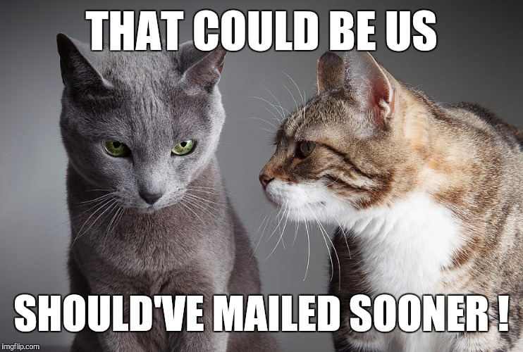 You Didn't Share ?!?! | THAT COULD BE US SHOULD'VE MAILED SOONER ! | image tagged in you didn't share | made w/ Imgflip meme maker