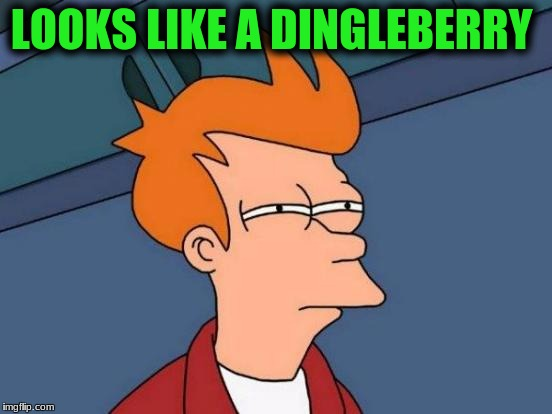 Futurama Fry Meme | LOOKS LIKE A DINGLEBERRY | image tagged in memes,futurama fry | made w/ Imgflip meme maker