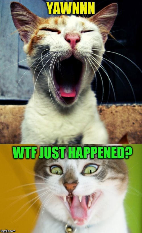 YAWNNN WTF JUST HAPPENED? | made w/ Imgflip meme maker