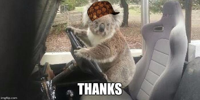 koala rolling | THANKS | image tagged in koala rolling,scumbag | made w/ Imgflip meme maker