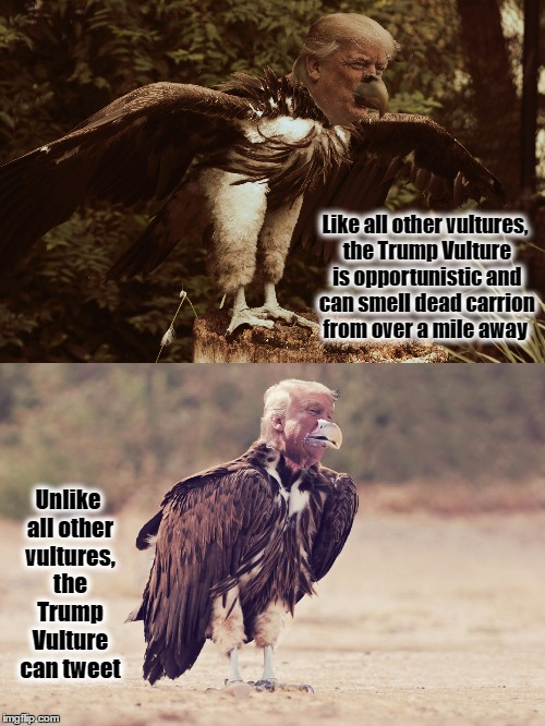 Fun Facts about the Trump Vulture | Like all other vultures, the Trump Vulture is opportunistic and can smell dead carrion from over a mile away Unlike all other vultures, the  | image tagged in donald trump,vulture,resist,trump tweet,london bridge | made w/ Imgflip meme maker