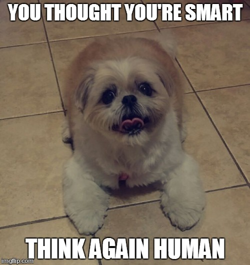 YOU THOUGHT YOU'RE SMART THINK AGAIN HUMAN | image tagged in yeaaa man | made w/ Imgflip meme maker