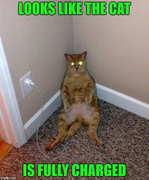 Not all cats are solar powered. | LOOKS LIKE THE CAT IS FULLY CHARGED | image tagged in cat fully charged,memes,cats,funny,animals,funny cats | made w/ Imgflip meme maker