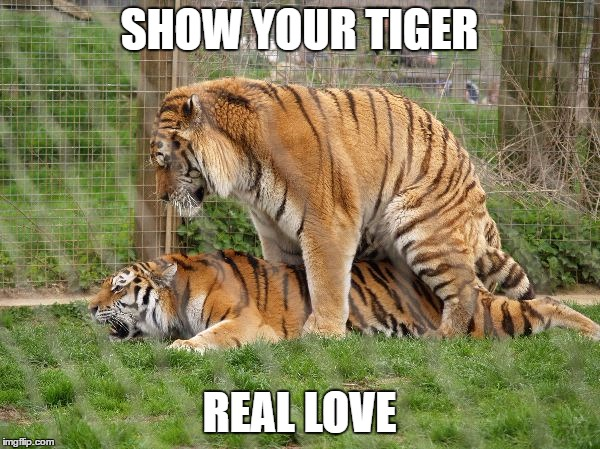 SHOW YOUR TIGER REAL LOVE | image tagged in tiger love | made w/ Imgflip meme maker