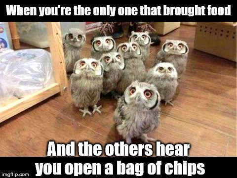 When you're the only one that brought food And the others hear you open a bag of chips | image tagged in memes,animals,owls,food,don't touch my food | made w/ Imgflip meme maker