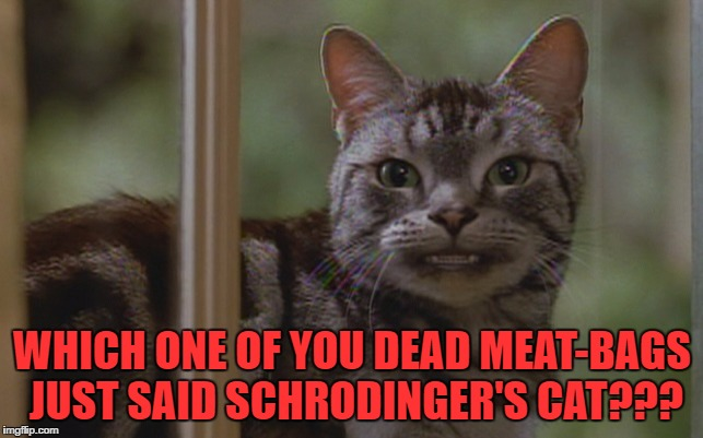Schrodinger's cat | WHICH ONE OF YOU DEAD MEAT-BAGS JUST SAID SCHRODINGER'S CAT??? | image tagged in schrodinger's cat,cat,anger | made w/ Imgflip meme maker