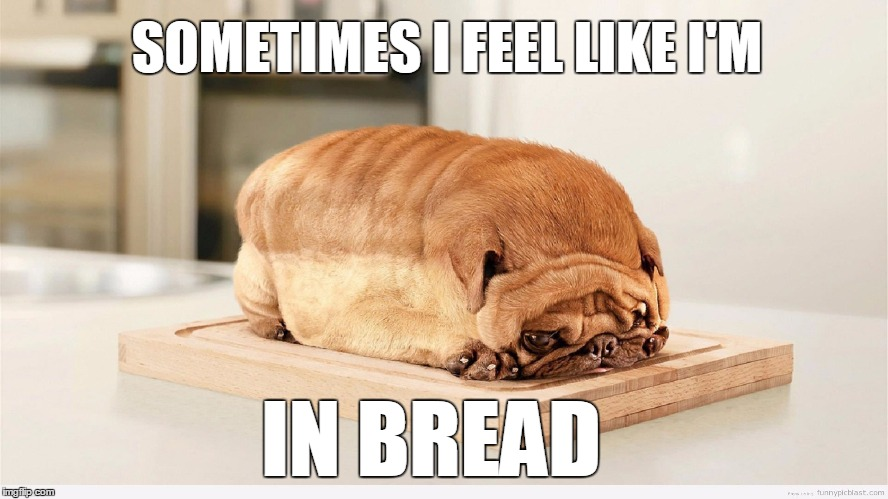 In-bread animals.  | SOMETIMES I FEEL LIKE I'M IN BREAD | image tagged in pugs,meme,bread | made w/ Imgflip meme maker