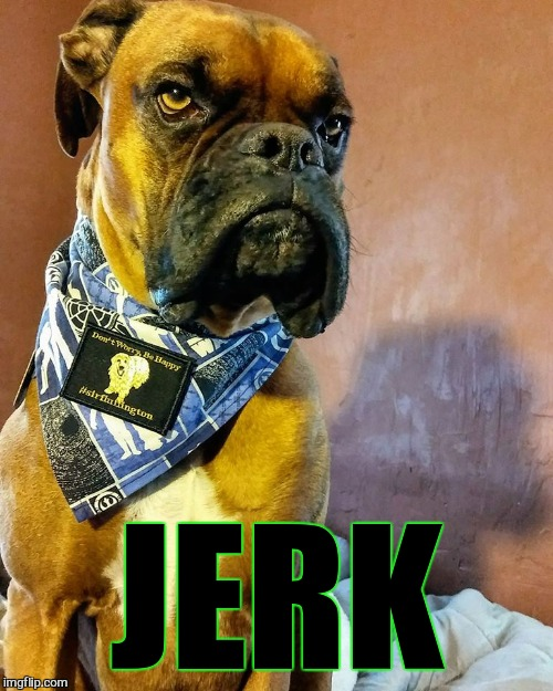 Grumpy Dog | JERK | image tagged in grumpy dog | made w/ Imgflip meme maker