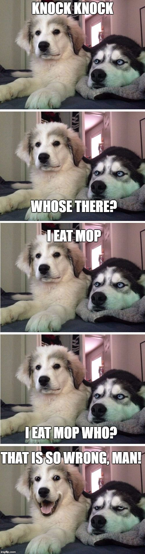 Knock Knock Dogs | KNOCK KNOCK WHOSE THERE? I EAT MOP I EAT MOP WHO? THAT IS SO WRONG, MAN! | image tagged in knock knock dogs | made w/ Imgflip meme maker