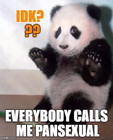 PansBear | ?? | image tagged in memes,lol so funny,lgbtq,gender confusion,sarcastic bear,confused panda | made w/ Imgflip meme maker