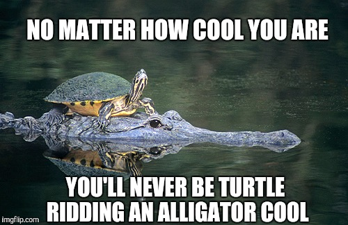NO MATTER HOW COOL YOU ARE YOU'LL NEVER BE TURTLE RIDDING AN ALLIGATOR COOL | image tagged in jbmemegeek,turtle ridding alligator,turtle meme,alligator,cool | made w/ Imgflip meme maker