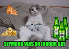 When the owner is away, the cat will play!!! | SEYMOUR WAS AN INDOOR CAT | image tagged in indoor cat,memes,cats,funny cats,animals,funny | made w/ Imgflip meme maker
