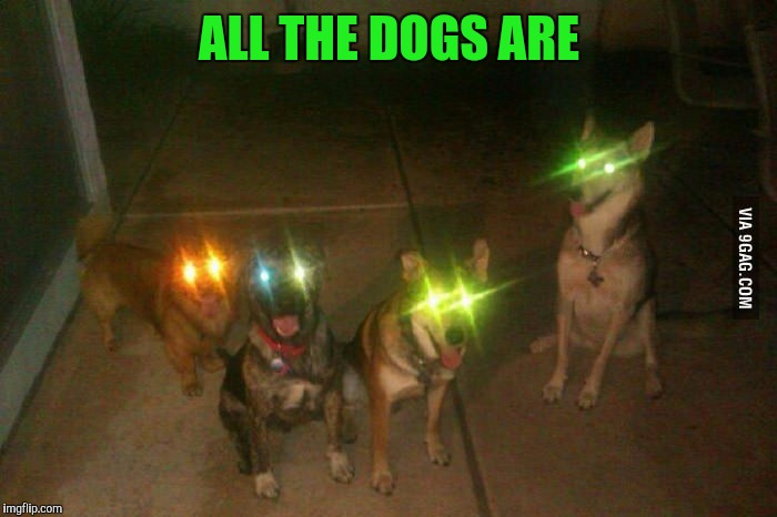 ALL THE DOGS ARE | made w/ Imgflip meme maker