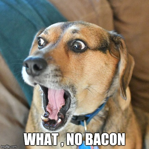 WHAT , NO BACON | image tagged in shocked dog | made w/ Imgflip meme maker