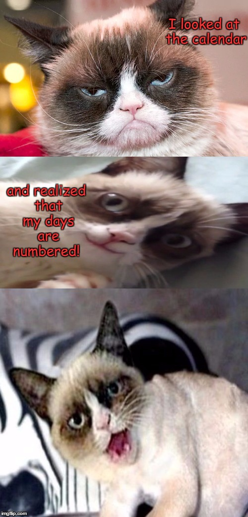 Bad Pun Grumpy Cat | I looked at the calendar and realized that my days are numbered! | image tagged in bad pun grumpy cat | made w/ Imgflip meme maker