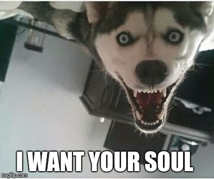 I WANT YOUR SOUL | image tagged in demon dog | made w/ Imgflip meme maker